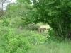 tnz_safari_077