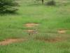 tnz_safari_086