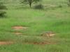 tnz_safari_087