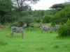 tnz_safari_088