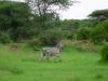 tnz_safari_089