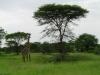 tnz_safari_090