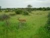 tnz_safari_091
