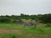 tnz_safari_092