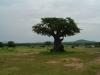 tnz_safari_093