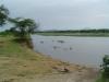 tnz_safari_115