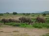 tnz_safari_118