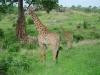 tnz_safari_122