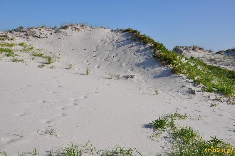 USA - rezerwat przyrody  na Półwyspie Barnegat NJ