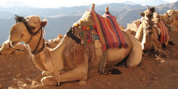 Egipt, Synaj – WYCIECZKA na Górę Synaj i do klasztoru św. Katarzyny