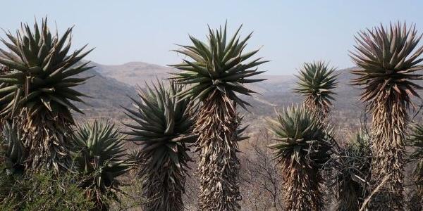 Rezerwat Przyrody Suikerbosrand niedaleko Johannesburga, RPA – GALERIA