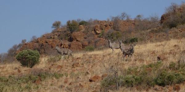 RPA, Johannesburg – WYCIECZKA do Rezerwatu Przyrody Suikerbosrand.