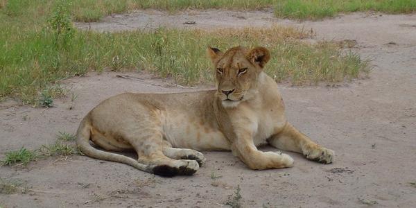 Safari w Kenii czy w Tanzanii? – GALERIA zdjęć z safari w Tanzanii