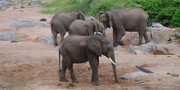 Gdzie na Safari do Tanzanii? – Parki Narodowe w Tanzanii – WYCIECZKA i porady praktyczne cz.1/3
