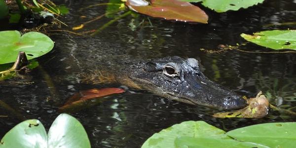 USA, Floryda – GALERIA zdjęć z Parku Narodowego Everglades